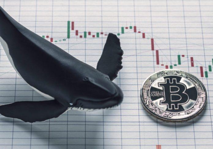биткоин-кит